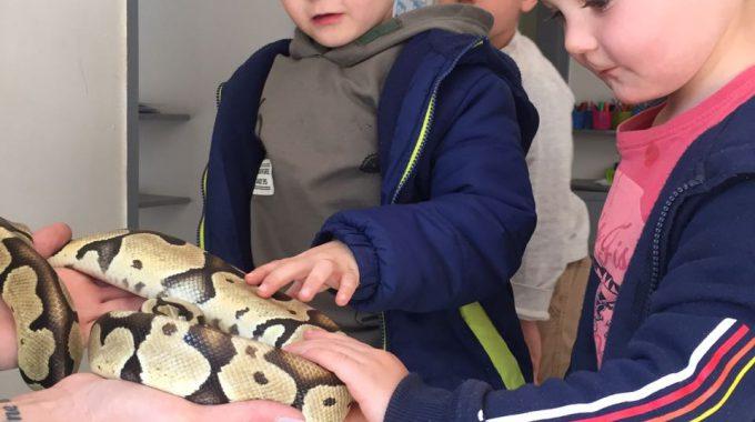 Reptile Visit